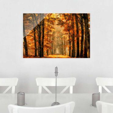 Glasbild - Märchenwald im Herbst - Quer 3:2