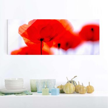 Glasbild - Magic Poppies - Panorama Quer - Blumenbild Glas