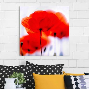 Glasbild Mohnblume - Magic Poppies - Blumenbild Glas Quadrat 1:1