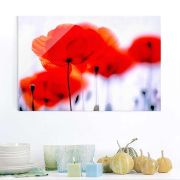 Glasbild - Magic Poppies - Quer 3:2 - Blumenbild Glas