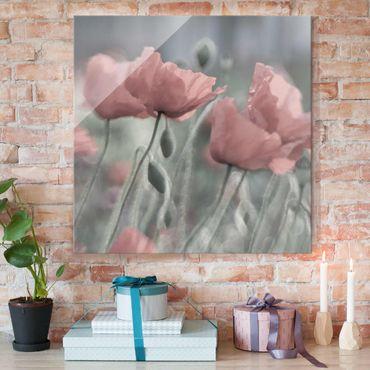 Glasbild - Malerische Mohnblumen - Quadrat 1:1