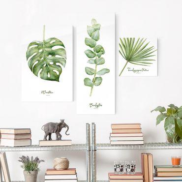 Glasbild mehrteilig - Aquarell Botanik - Collage 3-teilig