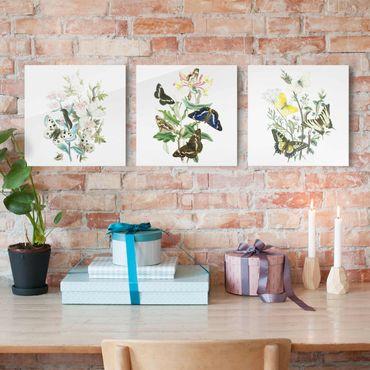 Glasbild mehrteilig - Britische Schmetterlinge Set I - 3-teilig