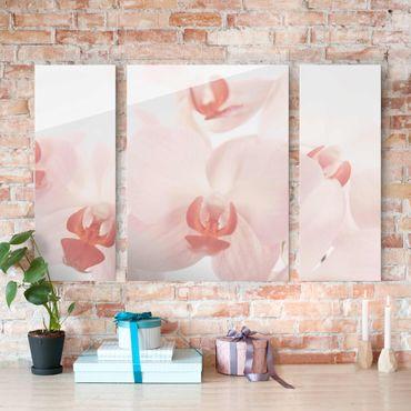 Glasbild mehrteilig - Helle Orchidee - Svelte Orchids 3-teilig