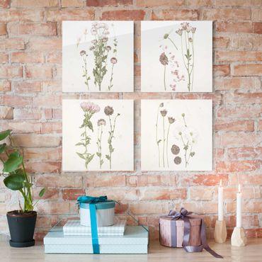 Glasbild mehrteilig - Herbarium in rosa Set I - 4-teilig