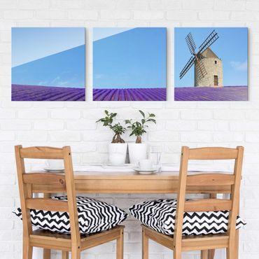 Glasbild mehrteilig - Lavendelduft in der Provence 3-teilig - Waldbild Glas