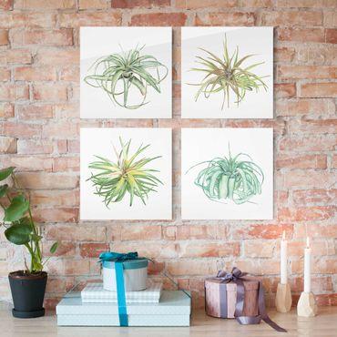 Glasbild mehrteilig - Luftpflanze Aquarell Set I - 4-teilig