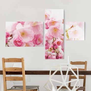 Glasbild mehrteilig - Schneebedeckte Kirschblüten - Collage 3-teilig