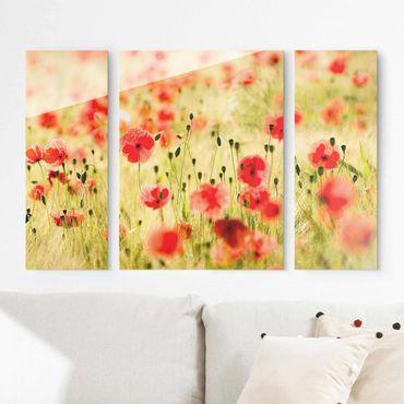 Glasbild mehrteilig - Summer Poppies 3-teilig