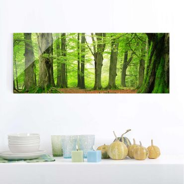 Glasbild - Mighty Beech Trees - Panorama Quer