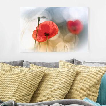 Glasbild - Mohnblumen am Morgen - Quer 3:2
