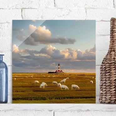 Glasbild - Nordsee Leuchtturm mit Schafsherde - Quadrat 1:1