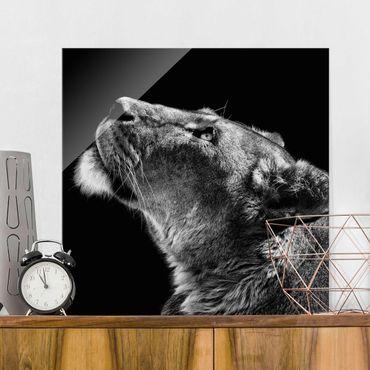 Glasbild - Portrait einer Löwin - Quadrat 1:1
