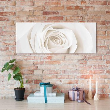 Glasbild - Pretty White Rose - Panorama Quer - Blumenbild Glas