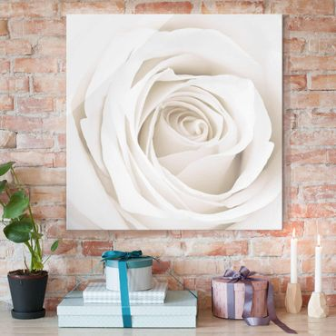 Glasbild - Pretty White Rose - Quadrat 1:1 - Blumenbild Glas
