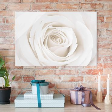 Glasbild - Pretty White Rose - Quer 3:2 - Blumenbild Glas
