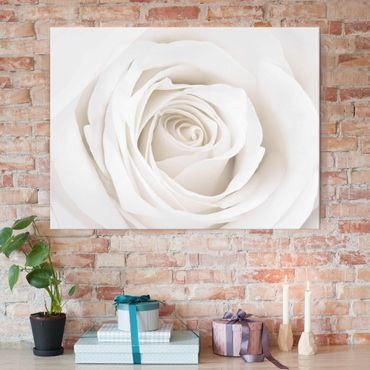 Glasbild - Pretty White Rose - Quer 4:3 - Blumenbild Glas