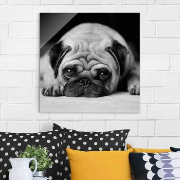 Glasbild - Pug Loves You II - Quadrat 1:1
