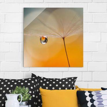 Glasbild - Pusteblume in Orange - Quadrat 1:1