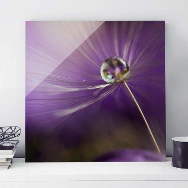 Glasbild - Pusteblume in Violett - Quadrat 1:1