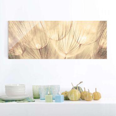 Glasbild - Pusteblumen Nahaufnahme in wohnlicher Sepia Tönung - Panorama Quer - Blumenbild Glas