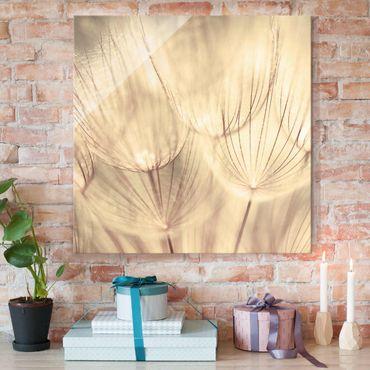 Glasbild - Pusteblumen Nahaufnahme in wohnlicher Sepia Tönung - Quadrat 1:1 - Blumenbild Glas
