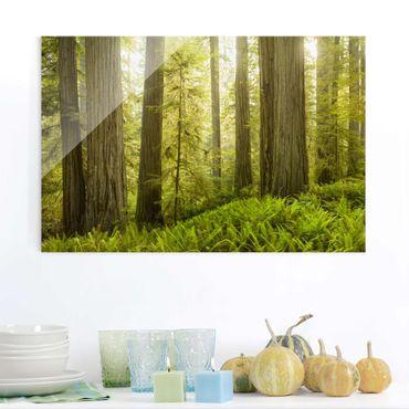 Glasbild - Redwood State Park Waldblick - Quer 3:2
