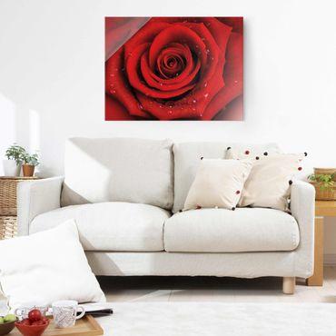 Glasbild - Rote Rose mit Wassertropfen - Quer 4:3 - Blumenbild Glas