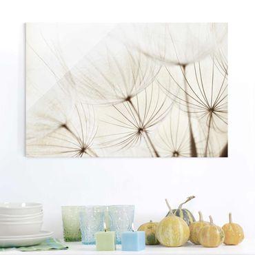 Glasbild - Sanfte Gräser - Quer 3:2 - Blumenbild Glas