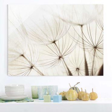 Glasbild - Sanfte Gräser - Quer 4:3 - Blumenbild Glas