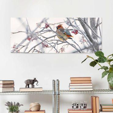 Glasbild - Seidenschwanz im Baum - Panorama