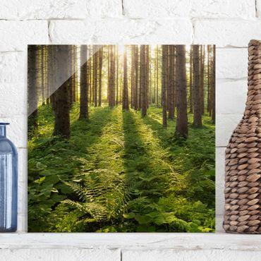 Glasbild - Sonnenstrahlen im Grünen Wald - Quadrat 1:1 - Waldbild Glas