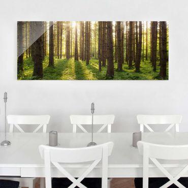Glasbild - Sonnenstrahlen in grünem Wald - Panorama Quer - Waldbild Glas