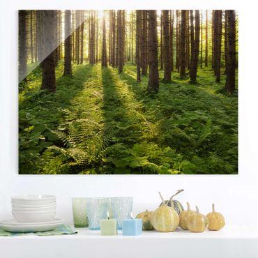 Glasbild - Sonnenstrahlen in grünem Wald - Quer 4:3 - Waldbild Glas
