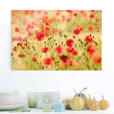 Glasbild - Summer Poppies - Quer 3:2