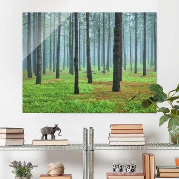 Glasbild Wald - Tiefer Wald mit Kiefern auf La Palma - Waldbild Quer 4:3