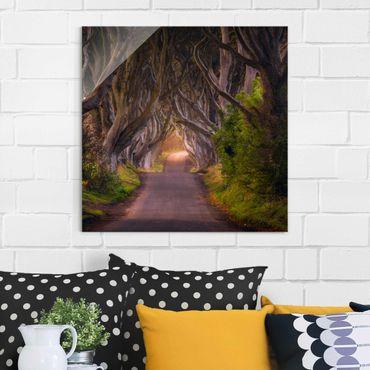Glasbild - Tunnel aus Bäumen - Quadrat 1:1