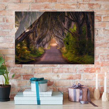 Glasbild - Tunnel aus Bäumen - Quer 3:2