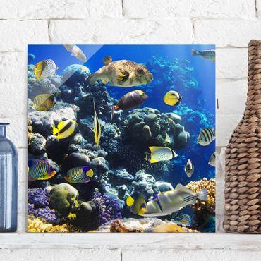 Glasbild - Underwater Reef - Quadrat 1:1