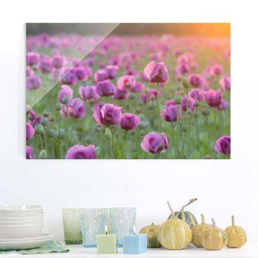 Glasbild Mohnblume - Violette Schlafmohn Blumenwiese im Frühling - Blumenbild Glas Quer 3:2