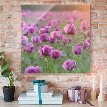 Glasbild - Violette Schlafmohn Blumenwiese im Frühling - Quadrat 1:1 - Blumenbild Glas