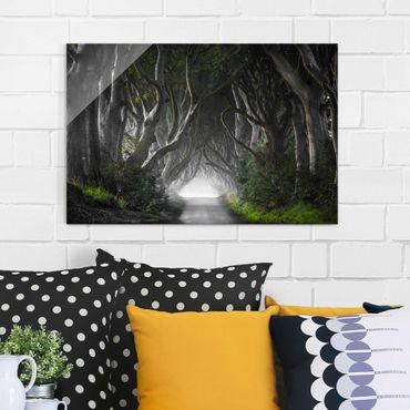 Glasbild - Wald in Nordirland - Quer 3:2