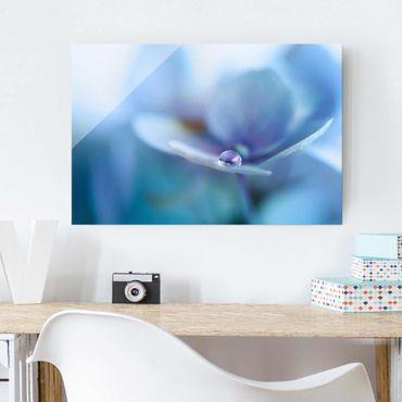 Glasbild - Wassertropfen Hortensienblüte - Querformat 2:3