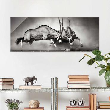 Glasbild - Wilder Kampf - Panorama Quer
