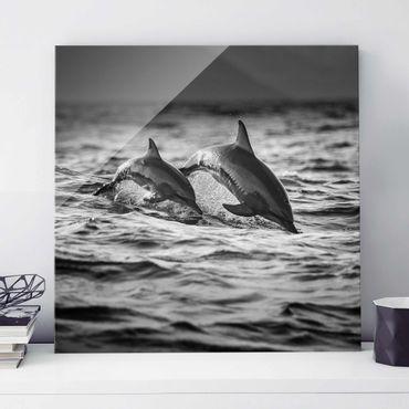 Glasbild - Zwei springende Delfine - Quadrat 1:1