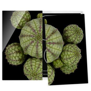 Herdabdeckplatte Glas - Euphorbia - Seeigelwolfsmilch - 52x60cm
