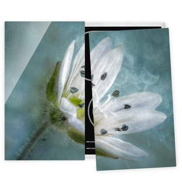 Herdabdeckplatte Glas - Weiße Blüte auf blau - 52x60cm