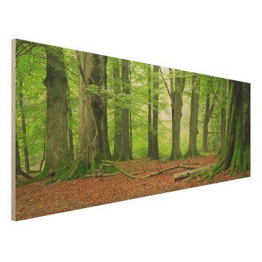 Holz Wandbild - Mighty Beech Trees - Panorama Quer