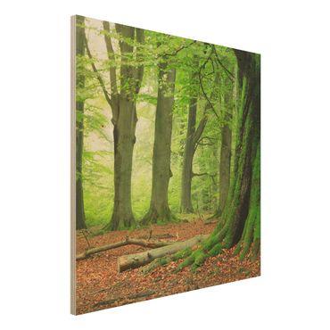Holz Wandbild - Mighty Beech Trees - Quadrat 1:1