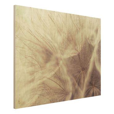 Holzbild Pusteblume - Detailreiche Pusteblumen Makroaufnahme mit Vintage Blur Effekt - Quer 4:3